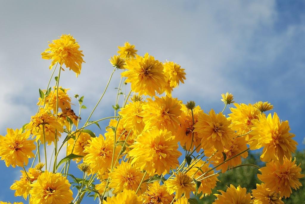 flower-256776_1280